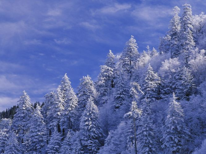 landscapes nature snow trees wildlife Earth wallpaper