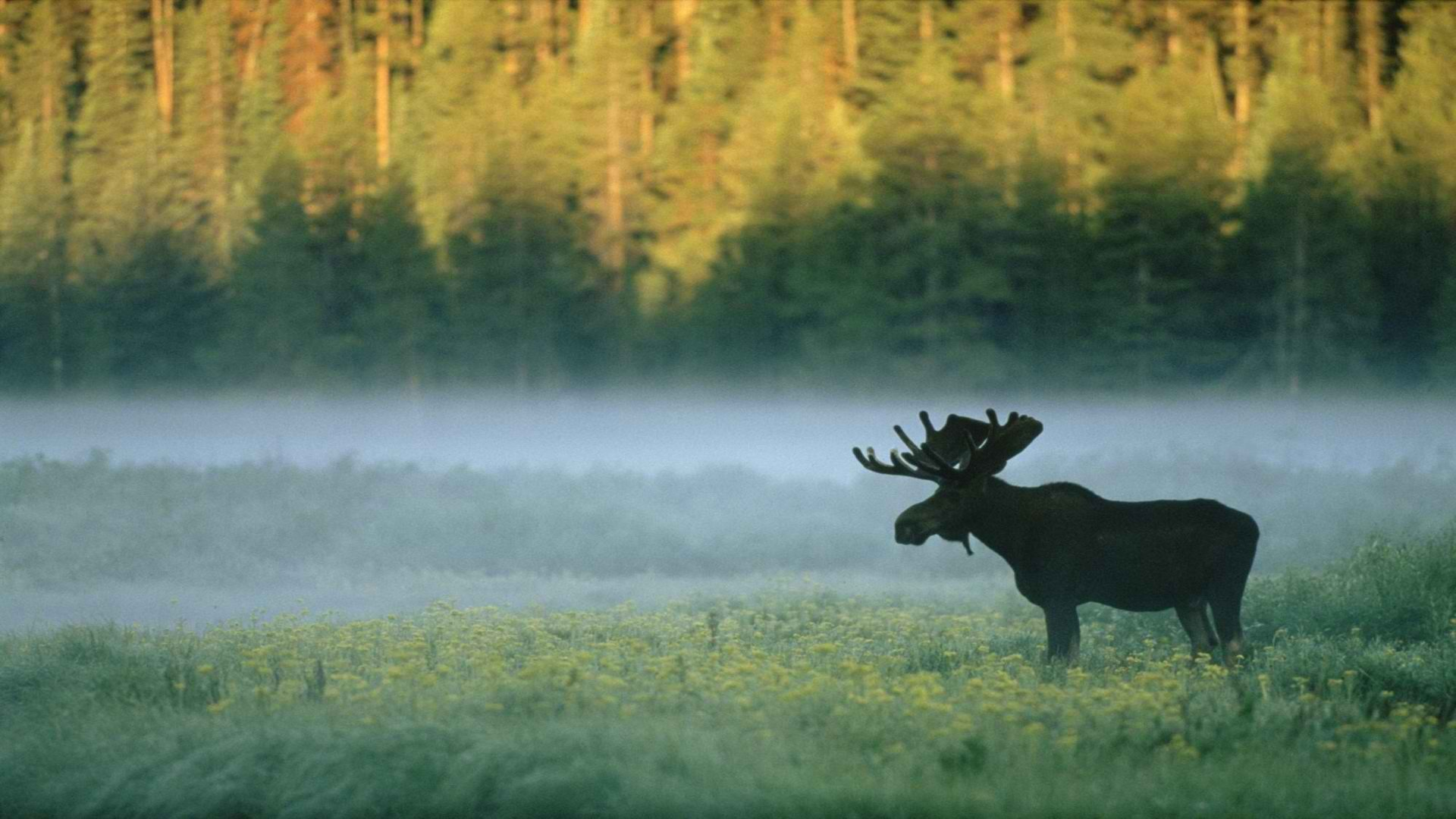 mist wyoming standing yellowstone national park wallpaper