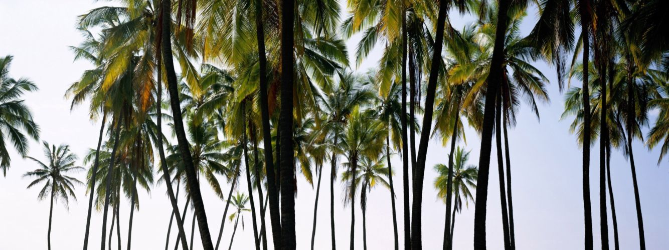 nature palm trees wallpaper
