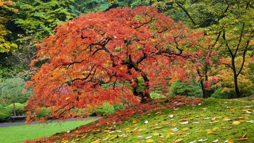 autumn Japanese Oregon Portland wallpaper