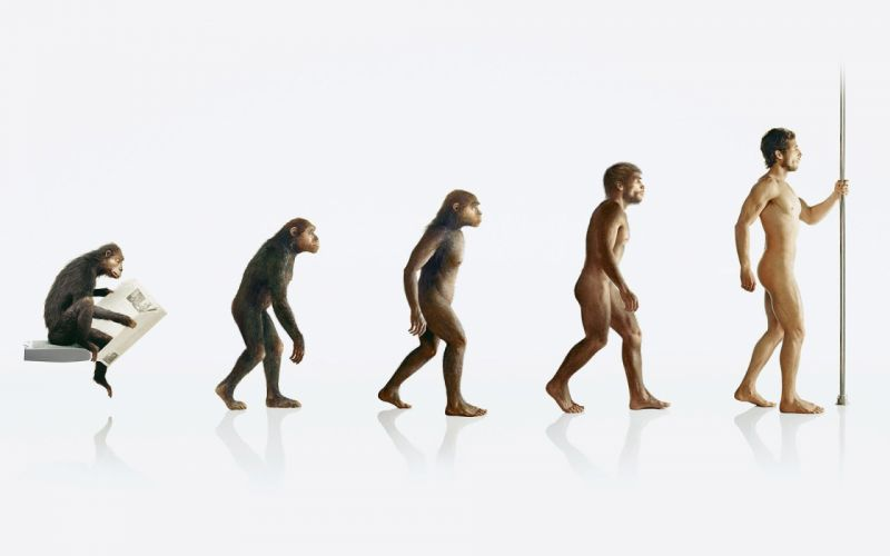 human evolution apes wallpaper