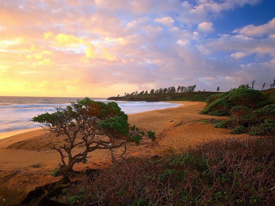 Hawaii donkey kauai beaches wallpaper