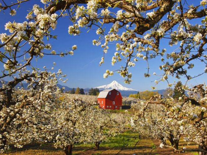 valleys blossoms Oregon wallpaper