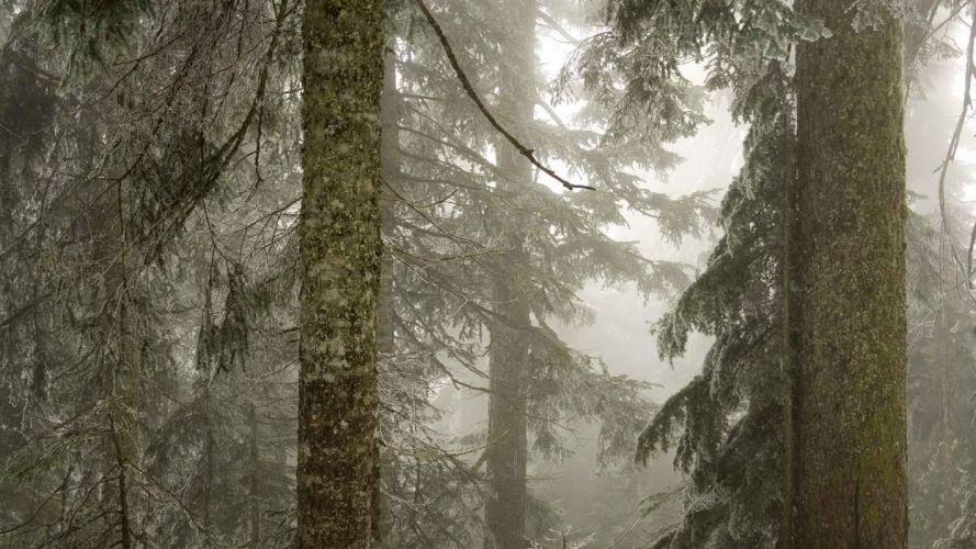 ice trees forests fog national Baker Washington Mount wallpaper
