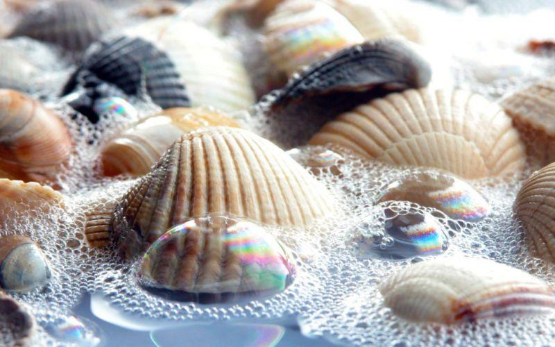 nature bubbles seashells wallpaper