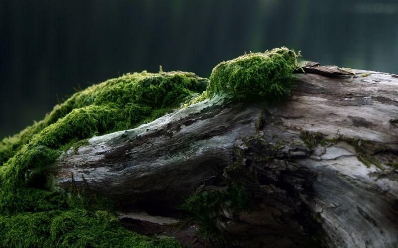 nature moss evening wallpaper