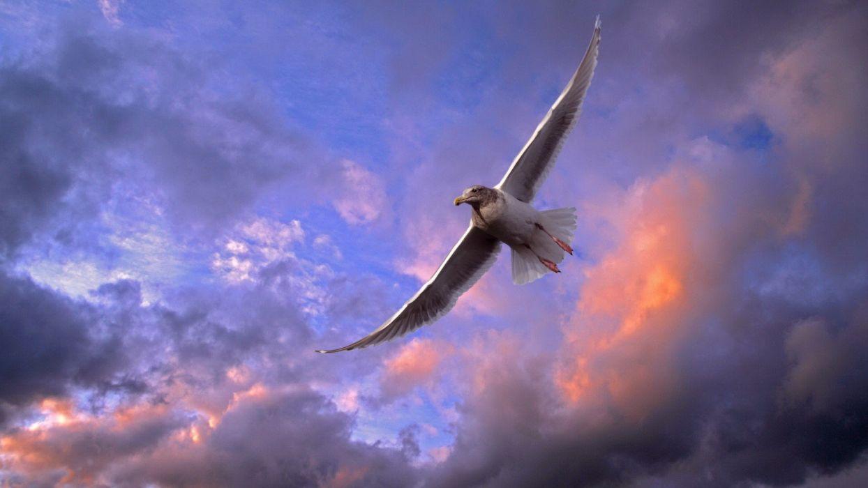 seagulls Washington wallpaper