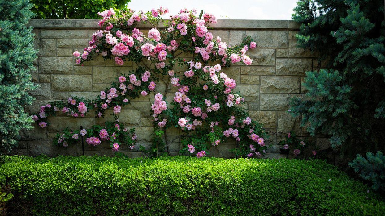 garden Flora wallpaper