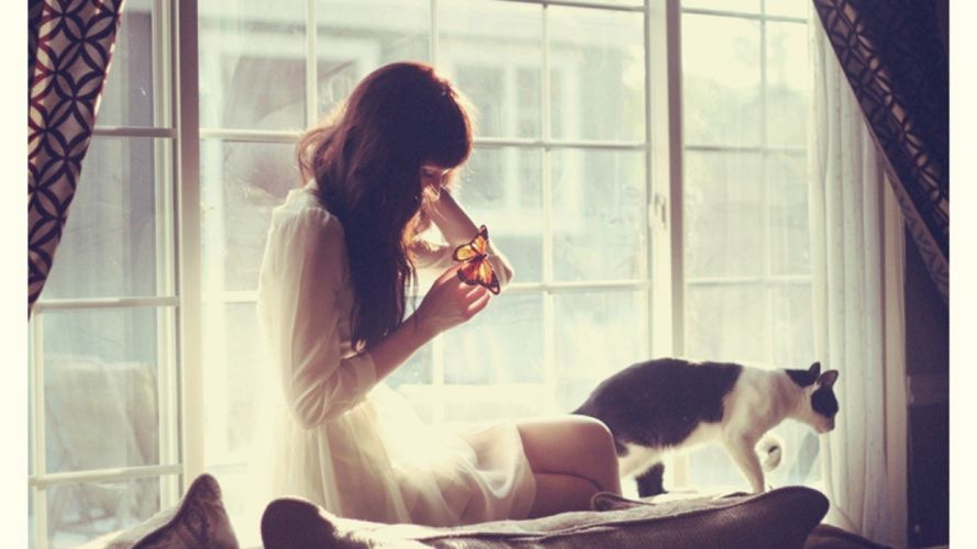cats animals teen lonely window panes Animal House wallpaper