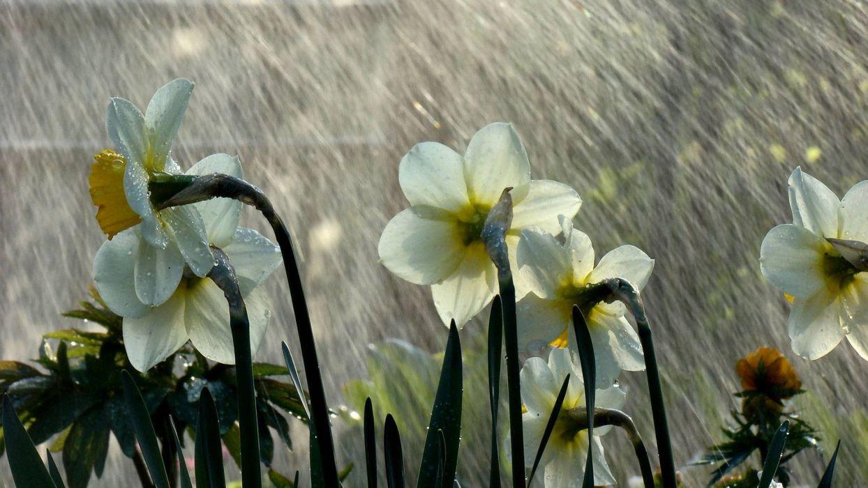 Rain Flowers Wallpaper 1920x1080 311575 Wallpaperup