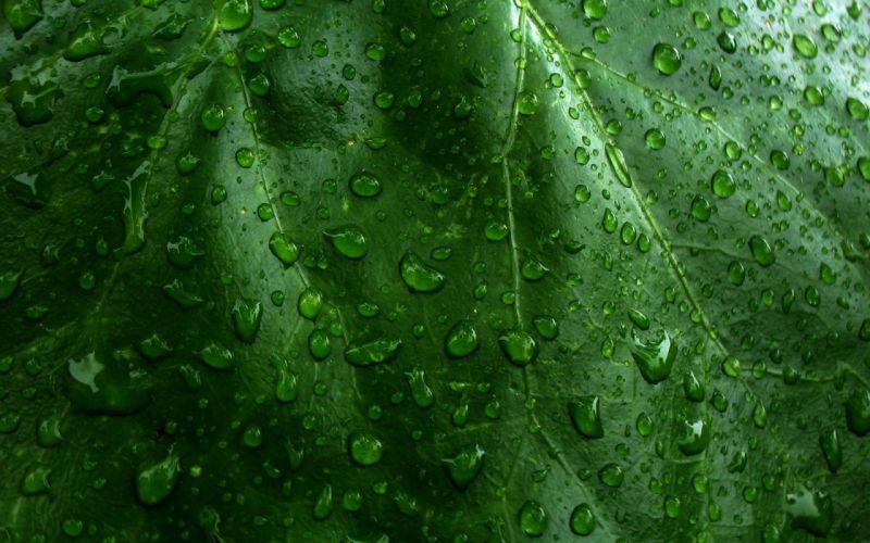 green nature leaves wet wallpaper