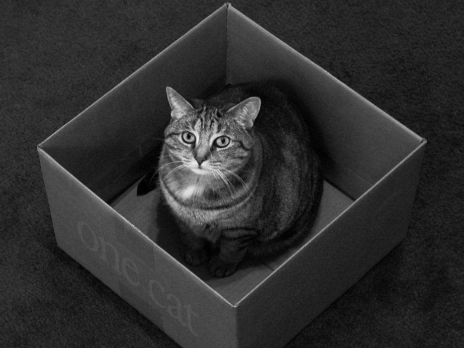cats animals Black Cat monochrome boxes wallpaper