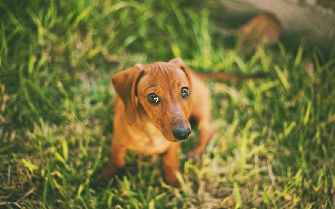 animals dogs depth of field wallpaper