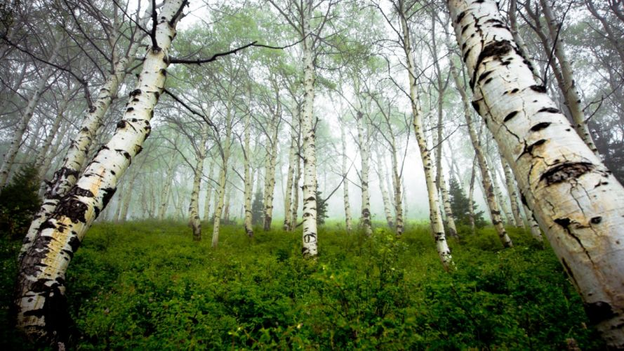 nature woods Arbres wallpaper