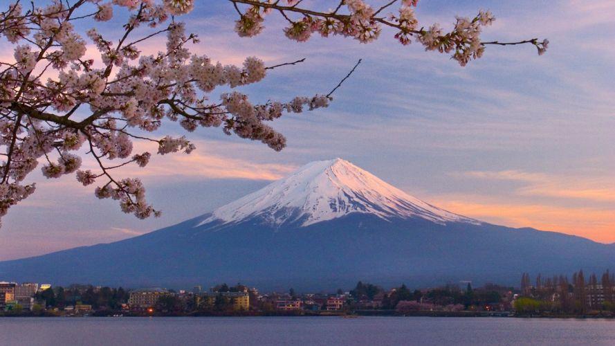 Japan Mount Fuji cherry blossoms wallpaper