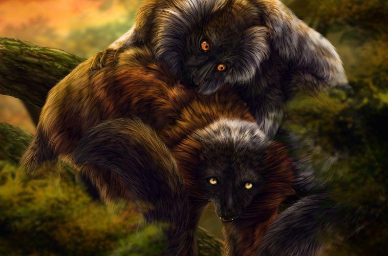 LEMUR primate Madagascar (43) wallpaper
