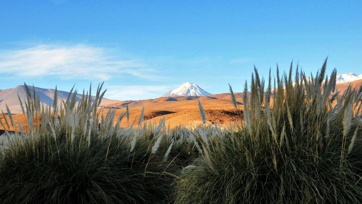 green Chile landscapes nature snow white flowers volcanoes Zorro light blue Andes Atacama Desert Cynosurus echinatus wallpaper