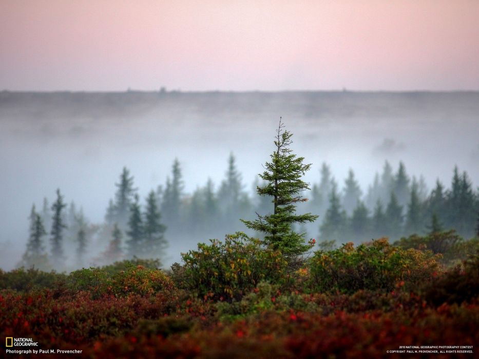 trees National Geographic wallpaper