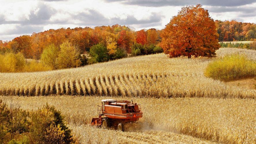 autumn corn harvest Michigan Cadillac cornfield wallpaper
