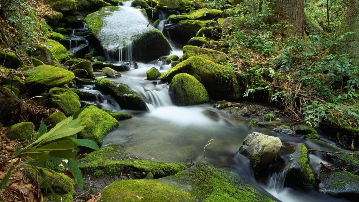 nature forests rivers wallpaper