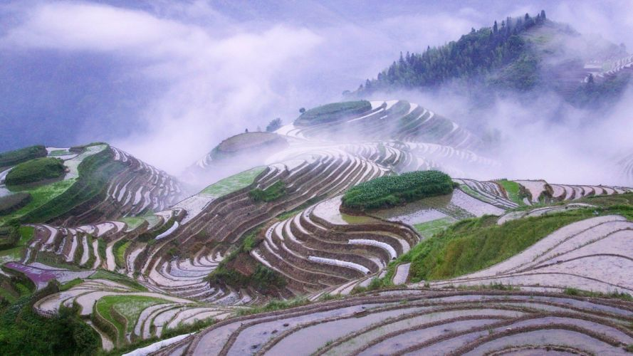 landscapes nature mist terraces natural scenery early morning rice terraces wallpaper