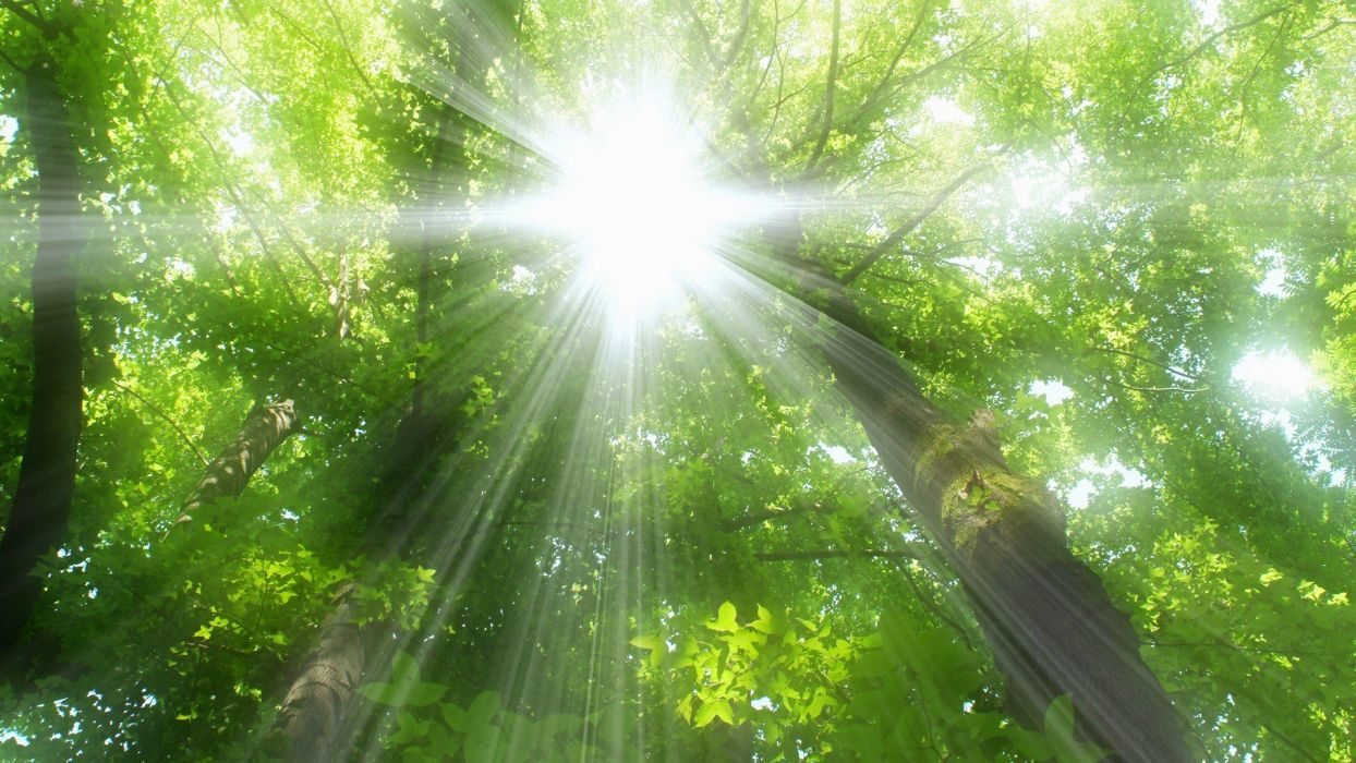 nature trees forests sunlight sun flare wallpaper