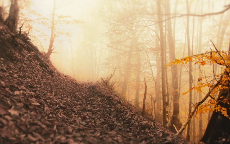 trees autumn forests leaves wallpaper