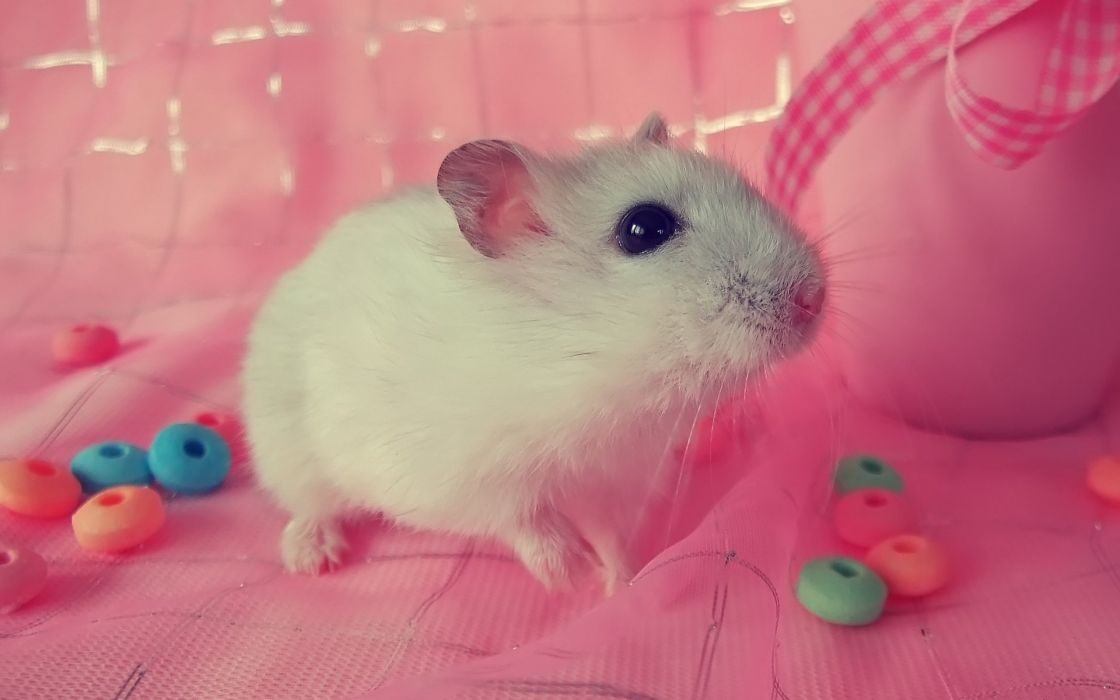 pink animals little hamsters candies wallpaper
