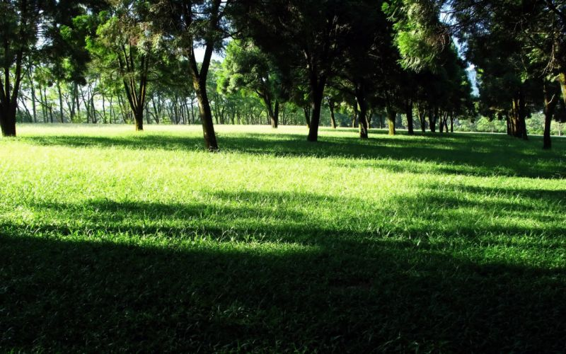 green nature trees grass shadows wallpaper