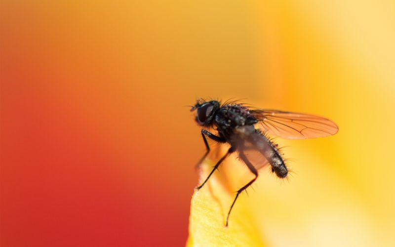 nature yellow animals orange insects macro flies wallpaper