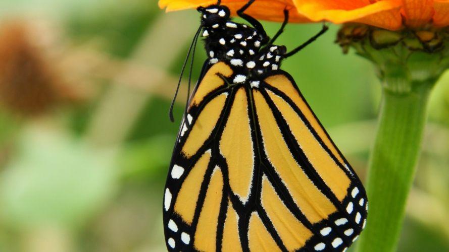 nature flowers macro depth of field upside down butterflies wallpaper