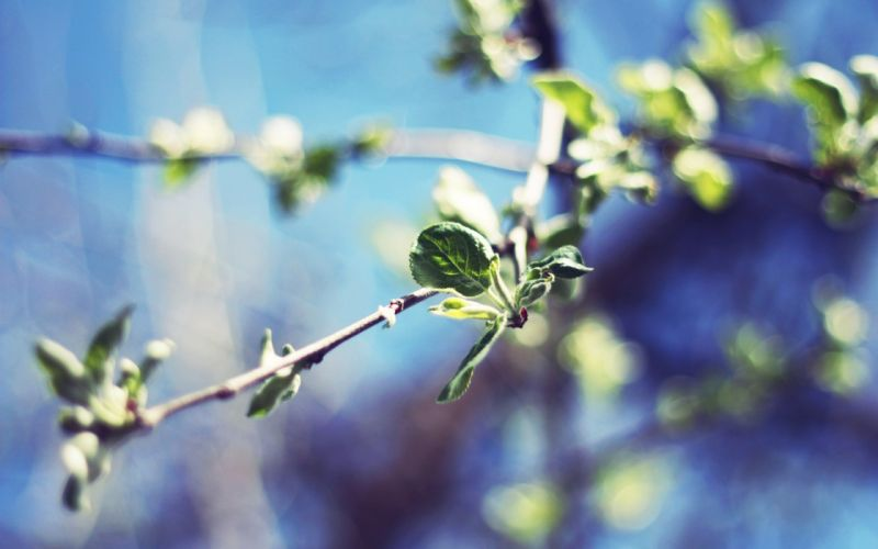 nature plants macro depth of field branches wallpaper