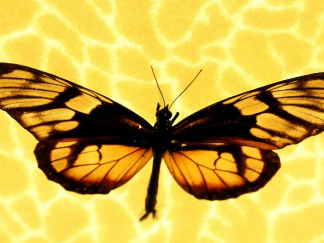 nature multicolor insects macro butterflies wallpaper