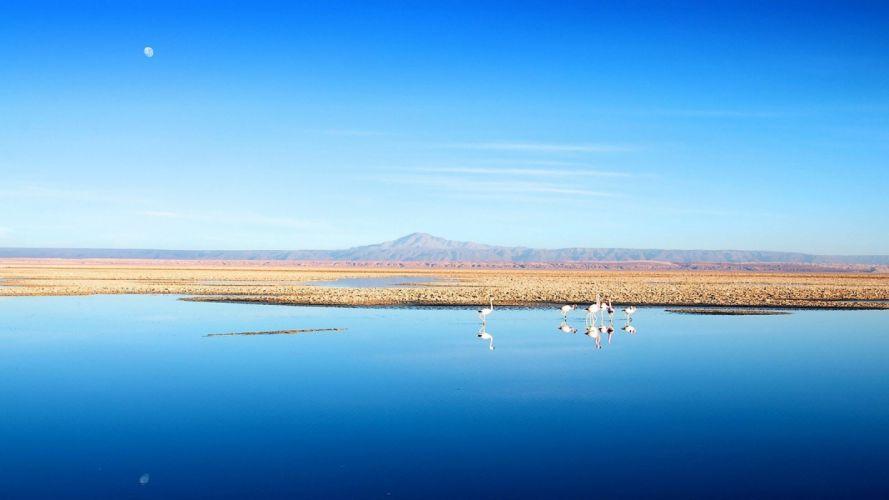 water Chile blue mountains landscapes nature birds calm flamingos lakes salt flats Andes Atacama Desert Salar de Atacama wallpaper