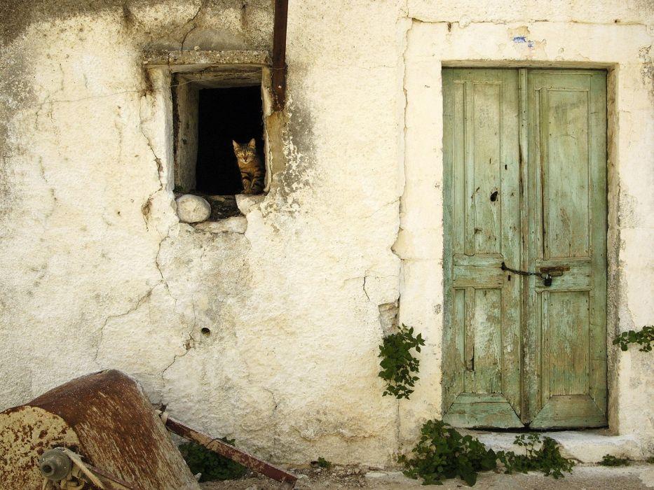 cats wall houses doors wallpaper