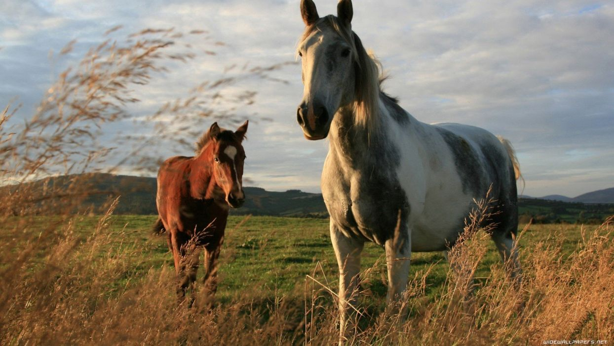 nature trees animals wheat horses skyscapes land baby animals wallpaper