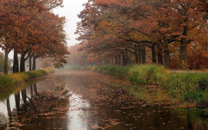 trees autumn rivers wallpaper