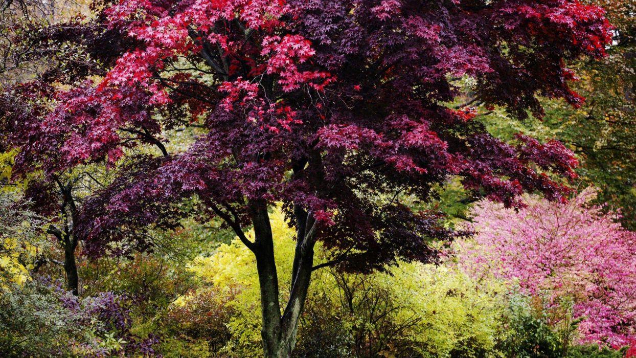 nature trees autumn vibrant colors New England wallpaper