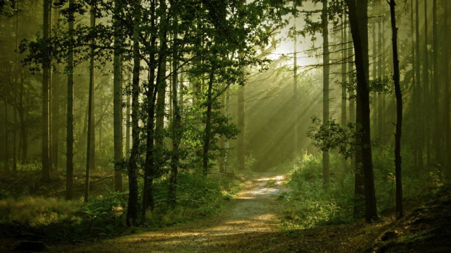 nature trees forests paths sunlight wallpaper
