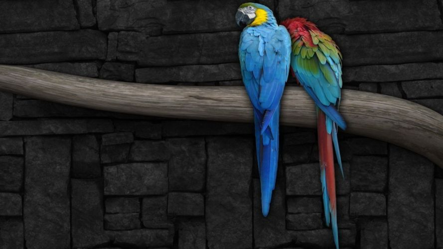 birds animals parrots branches Macaw wallpaper