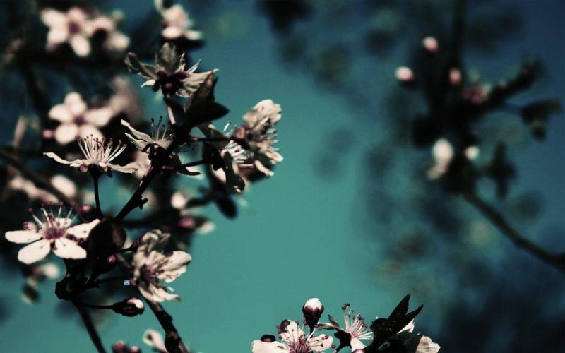 close-up nature flowers wallpaper