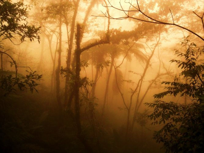 sunset trees forests fog HDR photography wallpaper