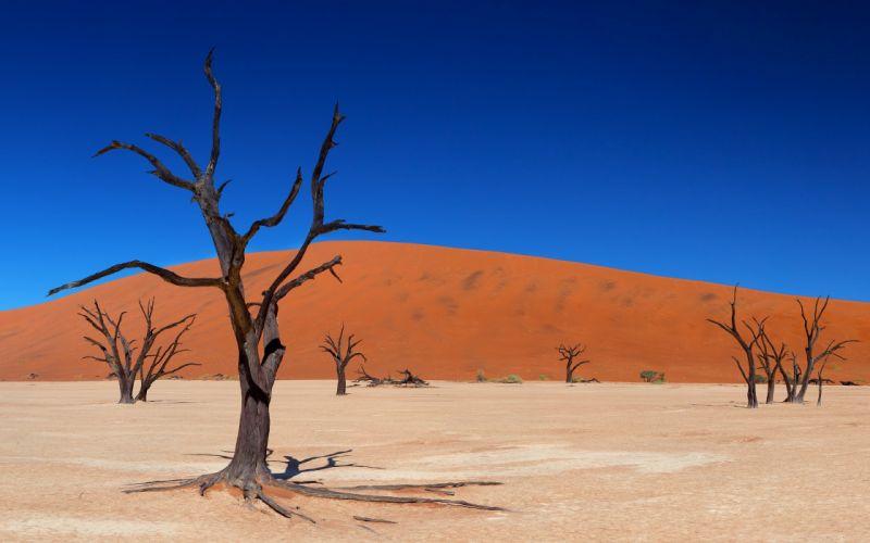 trees deserts dead wallpaper