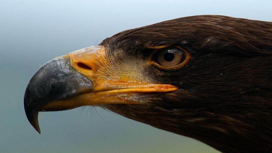 animals eagles deformed wallpaper