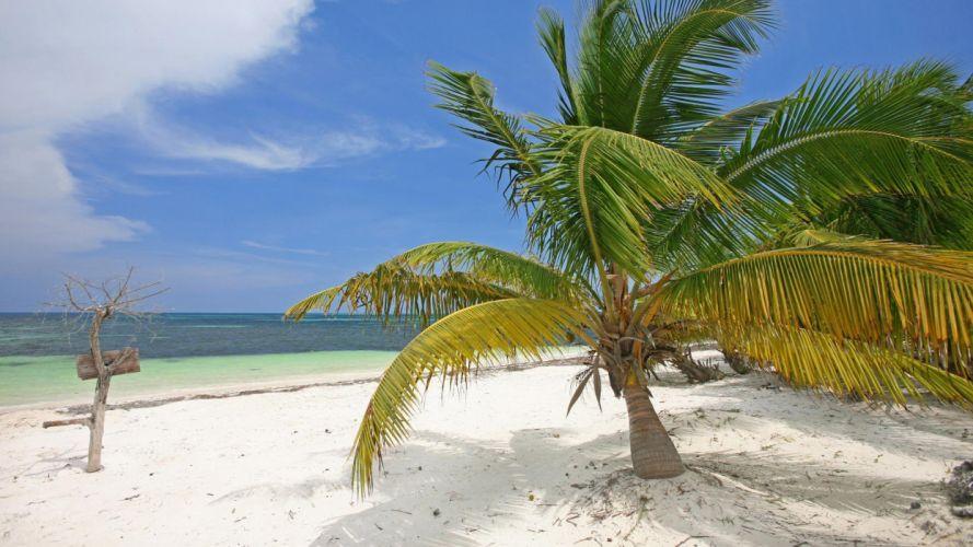 Mexico palm trees beaches wallpaper