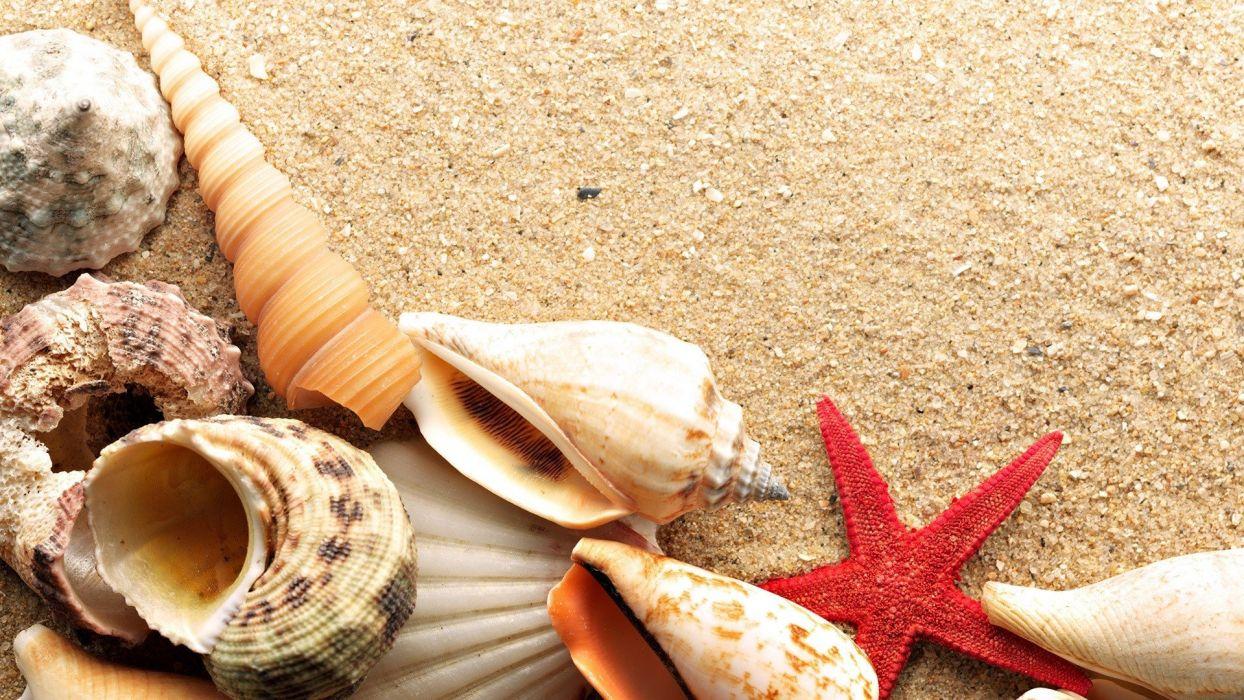 sand shells starfish beaches wallpaper