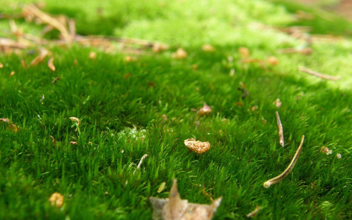 autumn leaves grass wallpaper