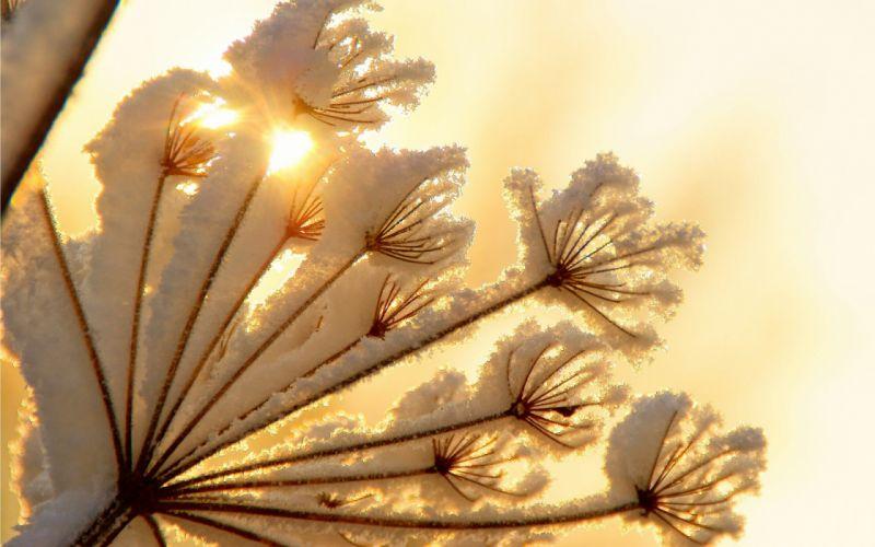 nature snow plants sunlight wallpaper