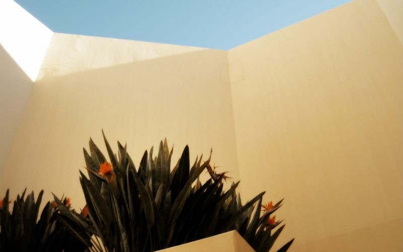 yellow architecture plants sunlight bright wallpaper