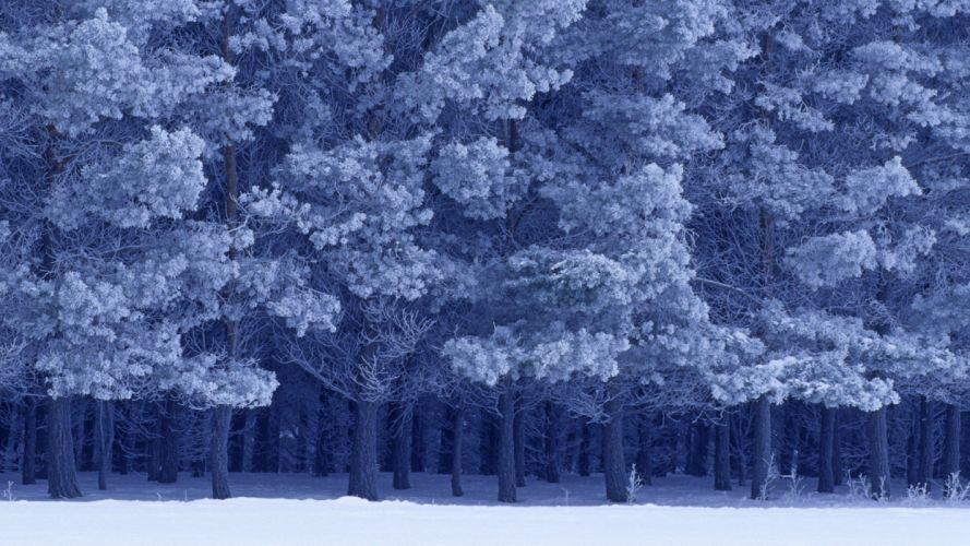 winter forests birds parks wallpaper